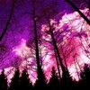 Forest, beautiful purple sky, oxygen, biologically productive, widsom