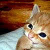 plotting kitten is plotting