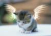 marcipa userpic