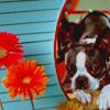 Dog Blue Flower