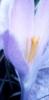 chamomilefree userpic