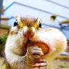 Eternia: chipmunk