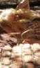dusty_fleur userpic