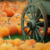 mary anne.: seasons: autumn pumpkin patch!