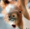 excited orang