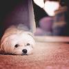 Elle Blessingway: Stock: Elle Puppy