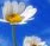 daisy_beauty userpic