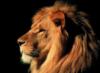 Я лев!