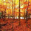 "<lj user=""hearts4bullets""> fall trees"