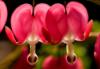 julia_fleur userpic
