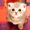고양이 ♥