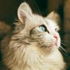 Shania Safira: Cat