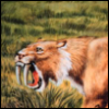 03: [lion] all teeth all the time