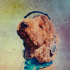 Stock: dogs love tunes