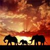 Travel: Africa - Elephants