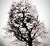 Holiday Skeleton Tree