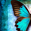 [Pic] Blue Butterfly