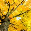 >> autumn