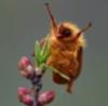 Sugarbug, Boo-yah!