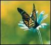 Farfalla+fiore