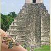 quetzal comes home