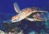 turtlesnake userpic