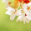 flowers - white flowers
