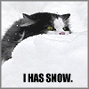 Snow, I haz it