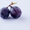 heidelbeeren (shalowater)