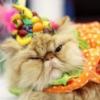 cat | ridiculous