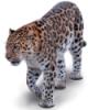 leopard_2010