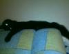 cat_80 userpic