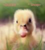 duckyshop userpic