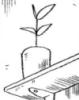 Sacada de un Doujinshi de Naruto
