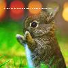 ...y wendy creció.: cute bunny