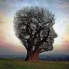 одинокое дерево голова