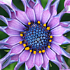 cha_purple_flower