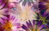 shy_margaret userpic
