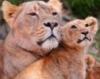 Светская львица