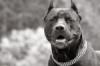 cachorro_louco userpic