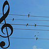 musical birds on a wire