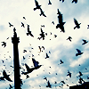 Miles Cain: Bird tower
