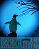 Пингвин на столбе