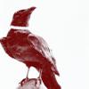 raven, tinted, crow