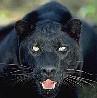 cybercat48 userpic