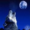 Волк воет на луну