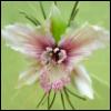 Лилия: орхидея