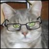 Ученая Кошка