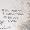 The laziest over achiever you'll ever meet: Be an owl