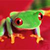 ozfroggirl userpic